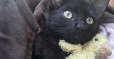 Un Marine qui naviguait aux alentours de la ville de Stuart, en Floride, a trouvé un chaton qui tentait désespérément de garder la tête hors de l'eau. Juste sous un pont, le pauvre félin essayait de s'agripper à… des huîtres.