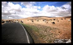 Training GPS Routes available for download  - Fuerteventura | Pajara | Spain | Cycling | Training