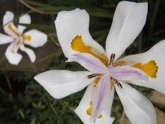 Flor - Fotografía Verónica EB