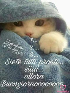 Immagini Belle da ImmaginiBuongiornoBelle.it Good Morning Good Night, Day For Night, Good Morning Quotes, Italian Greetings, Italian Memes, Messages For Friends, Walk In My Shoes, Good Mood, Cute Animals