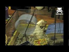 Hamster wiggles to freedom, proves it's most flexible hamster ever.