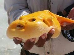 Mango Fish.  For some reason this really made me laugh ...