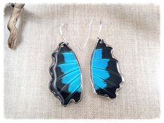 Real Butterfly Wing Jewelry Butterfly Wing Earrings by JBirdsPerch Butterfly Top, Butterfly Earrings, Butterfly Wings, Wing Earrings, Statement Earrings, Drop Earrings, Butterfly Species, Insect Jewelry, Black Wings