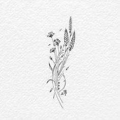 likes 20 comments BACHT Drawing & Illustration (Bac … - diy tattoo images Mini Tattoos, Cute Tattoos, Small Tattoos, Wildflower Drawing, Wildflower Tattoo, Diy Tattoo, Tattoo Life, Wheat Tattoo, Flower Sketches