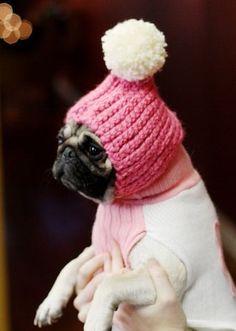 DIY pom pom snow hat for doggies.she has 2 pugs! Baby Animals, Cute Animals, Puppy Hats, Diy Hat, Cute Pugs, Cutest Dogs, Pom Pom Hat, Pom Poms, Pug Love