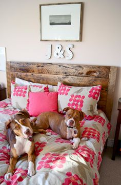 Great bed, duvet and pups! via desire to inspire
