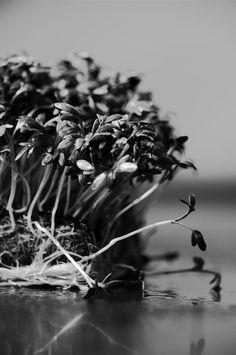 Waterkers Plants, Flora, Plant, Planting