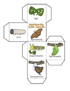 Butterfly Life Cycle, Learning Cube, Roll, Graph and Count kelebekler portfolio Preschool Science, Science For Kids, Preschool Crafts, Preschool Kindergarten, Life Of A Butterfly, Butterfly Crafts, Graphing Activities, Science Activities, Writing Activities