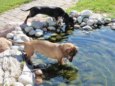 På fisketur i dammen