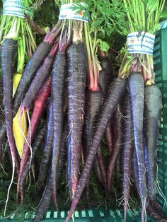 Purple carrots (usually orange or white inside) have even more beta carotene than their orange cousins, and get their pigment from anthocyan. Health Benefits Of Carrots, Carrot Benefits, Growing Carrots, Growing Vegetables, Carrot Seeds, Nutrition And Dietetics, Beta Carotene, Lawn And Garden, Dragon