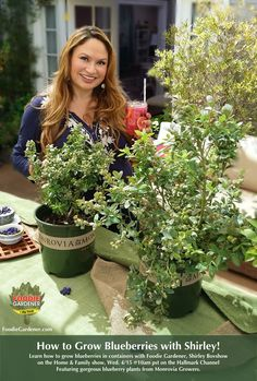 SET YOUR DVR'S FOR TOMORROW! Foodie Gardener, Shirley Bovshow shows you how to grow blueberries in containers. So easy, so rewarding. Featuring blueberry plants from Monrovia. Home & Family show on Hallmark Channel USA @10am pst, Wednesday. FoodieGardener.com
