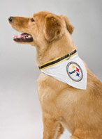 Pittsburgh Steelers Dog Collar Bandana