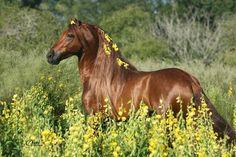 Beautiful chestnut horse in a field of flowers
