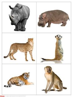 Exotic animals (part – Class scenarios and articles – Months … – Tq Best Shares Fun Worksheets For Kids, Flashcards For Kids, Montessori Materials, Montessori Activities, Safari Animals, Animals And Pets, Baby Flash Cards, Preschool Colors, Exotic Pets