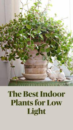 Best Indoor Plants, Best Plants, Indoor Plant Decor, Outdoor Plants, Low Light Plants, Inside Plants, Plantation, Interior Exterior, Growing Plants