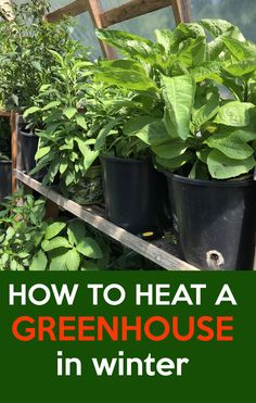 How to make the small greenhouse? There are some tempting seven basic steps to make the small greenhouse to beautify your garden. Winter Greenhouse, Cheap Greenhouse, Greenhouse Interiors, Indoor Greenhouse, Backyard Greenhouse, Greenhouse Growing, Greenhouse Plans, Greenhouse Vegetables, Greenhouse Wedding