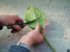Regrow Hydrangeas From Cutting-Hydrangea Propagation Tips-Cut Top Hydrangea Shade, Smooth Hydrangea, Hydrangea Not Blooming, Hydrangea Garden, Hydrangea Colors, Rooting Hydrangea Cuttings, Propagating Hydrangeas, Plantar, Growing Herbs