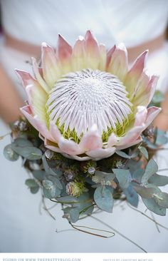 King protea and eucalyptus for a bouquet that will definitely leave an impression. Bouquet De Protea, Protea Flower, Flor Protea, Protea Wedding, Wedding Bouquets, Wedding Flower Arrangements, Floral Arrangements, Gardens, Ideas