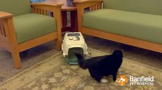 Cat Carrier Tips for an Easier Trip to the Vet