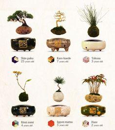 Air Bonsai : Air Bonsai | Sumally (サマリー)