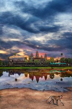 Angkor Wat Cambodia / Watched the sunset here while drinking a horrid local wine and eating a crispy fried frog. A beautiful place & a wonderful adventure.