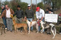 Darregueira noticias: #StopGalgueros: El Gobierno promulgó la ley que pr...