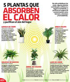 Eco Garden, Green Garden, Garden Art, Garden Plants, Indoor Plants, House Plants, Garden Design, Organic Gardening, Gardening Tips