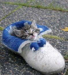 Little kitten sleeping in a shoe