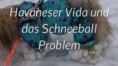 Hier seht ihr Vida's neuen Langhaar freundlichen Overall und ich berichte über unser Problem mit dem Schnee. Für Tips und Kommentare bin ich dankbar.