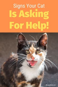 Discover 5 ways your cat asks for help. Cats are quieter than dogs, but know exactly how to ask for help! #waysyourcatasksforhelp #catbehaviorexplained #howcatscommunicate Cat Behavior, All About Cats, Ask For Help