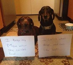 This sounds familiar.....and they look identical to the two running around my kitchen hahaha