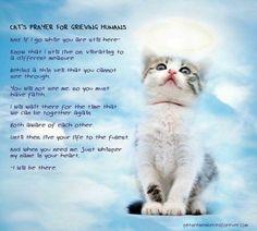 MAINE COON CAT Guardian Angel Fridge Magnet No 4 Pet Loss