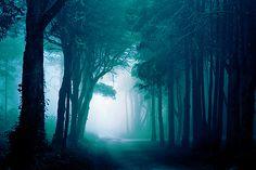 misty woodland way