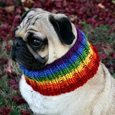 Stop it!! Too cute!    Rainbow Neck Warmer for Dogs by jessicalynneart on Etsy, $9.00