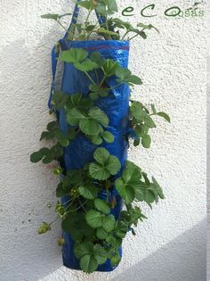 sembrar en bolsas/ growing plants on bags for saving space :) Make a ceramic version of this.