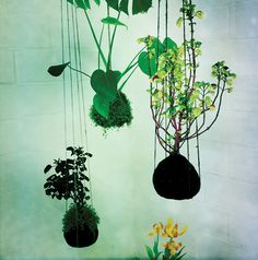 Hanging gardens from Opus Studio--love! #gardens #floral