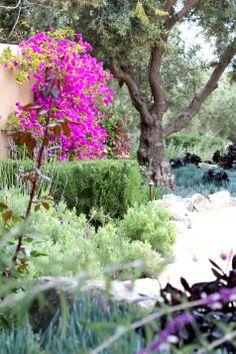 lavendar, rosemary, olive