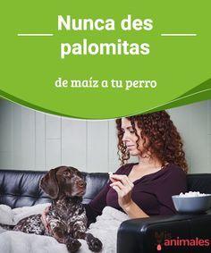 Nunca des palomitas de maíz a tu perro Nos preparamos para ver una película tumbados en el sofá y con un gran recipiente de palomitas de maíz. ¿Podemos compartirlas con nuestro perro? #palomitas #alimentación #daño #perros
