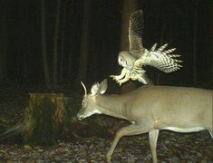 Hilarious Trail Cam Photos Show What Animals Do When They Think We're Not Watching.