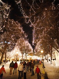 Rice Park Winter Wonderland in Saint Paul