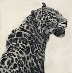 Chinese Leopard I / Panthera pardus japonica / 2012 / 61 x 60 cm / Pencil on panel Cat Drawing, Painting & Drawing, Snow Leopard Drawing, Realistic Pencil Drawings, Charcoal Drawings, Leopard Tattoos, African Bush Elephant, Amur Leopard, Elephant Tattoos