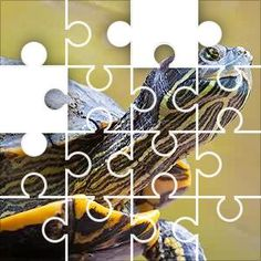 Turtle Right Jigsaw Puzzle, 67 Piece Classic. Turtle sticking its neck
