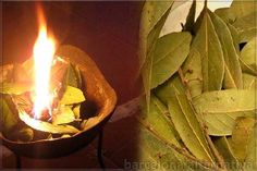 The promise and search for natural cures often leaves the seeker unsure. Unsure if natural remedies are really real, unsure if they will find a solution to their problem. Herbs For Health, Health Tips, Health And Wellness, Health Benefits, Health Remedies, Home Remedies, Burning Bay Leaves, Diabetes, Laurus Nobilis