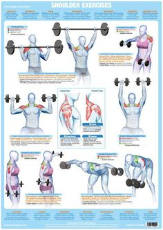 Weight Training, Bodybuilding and Muscle Anatomy Poster / Chart – Chartex Ltd Bodybuilding Posters, Bodybuilding Training, Bodybuilding Workouts, Weight Lifting Workouts, Weight Lifters, Weight Exercises, Weight Lifting Chart, Muscle Weight, Body Weight