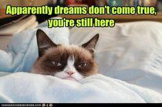 Tartar Sauce The Cat Captions | Apparently dreams don't come true - Cheezburger