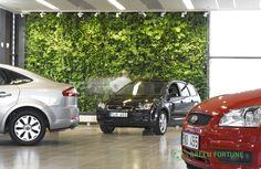 Green Fortune plantwall / vertical garden in retail space (car dealer).