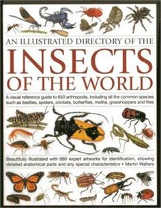 Book An Illustrated Directory Of The Insects Of The World: A Visual Reference Guide To 650 Arthropods… by Martin Walters