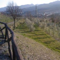 Terreni aziendali con vista su Pontremoli