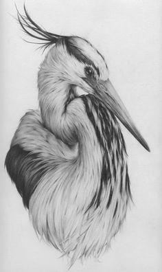 Portfolio of bird art by Vanessa Foley Bird Pencil Drawing, Pencil Drawings Of Animals, Animal Sketches, Bird Drawings, Cool Drawings, Drawing Sketches, Drawing Ideas, Drawing Animals, Realistic Drawings Of Animals