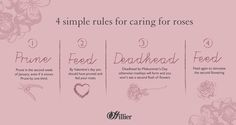 Here are our four simple rules to keep them in top condition… Wholesale Nursery, Rose Care, Simple Rules, Love Rose, Garden Care, English Roses, Gardening Tips, Garden Design, Gardens